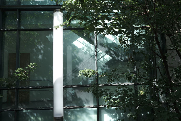 Low angle view of trees and plants seen through window