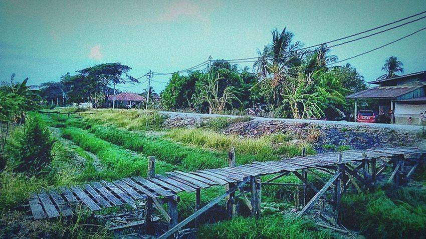 Green Color Rice Field Flowers, Nature And Beauty At Alor Setar Malaysia