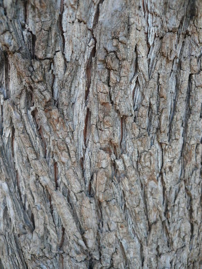 Pine tree bark Barks Pine Harsh Bark Pine Bark Pine Trees Against The Sky Tree Wrinkles Trunk Tree Wrinkls