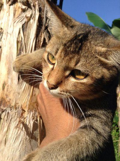 Lovely cat of mine