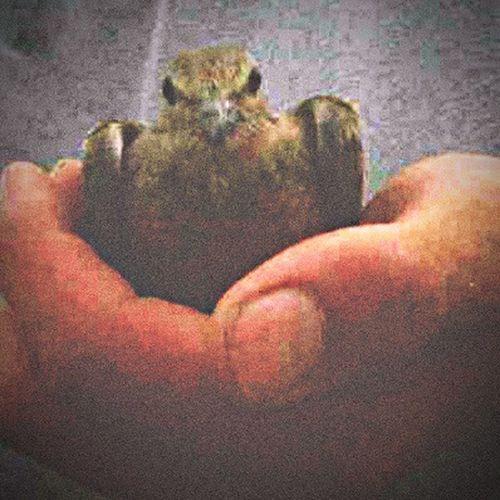 Taken with a blackberry..... Broken Wings Are Still Loved