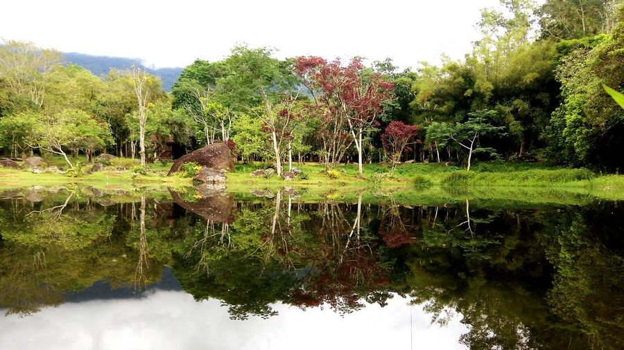 Reflection Water Nature Outdoors Lake Tree Day No People Beauty In Nature Growth Sky Grass River