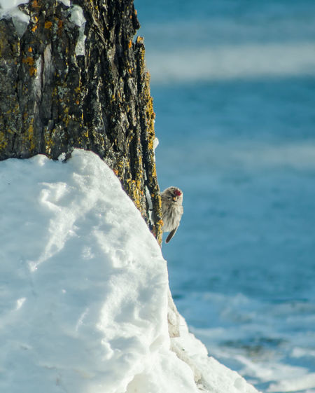 Close-up of bird perching on tree by sea against sky