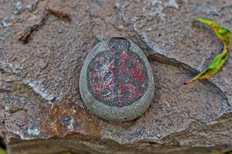 Ladybug Ladybug🐞 Painted Close-up Day Outdoors Painted Image Rock - Object Stone Perspectives On Nature EyeEmNewHere
