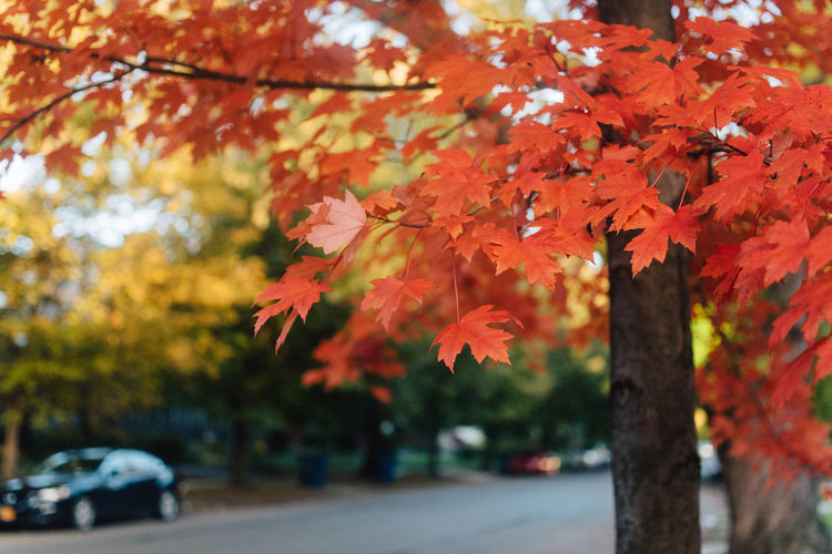 This Is Strength Beauty In Nature Motor Vehicle No People Car Plant Part Growth Outdoors Nature Transportation Orange Color Focus On Foreground Autumn Plant Mode Of Transportation Road Tree Change Natural Condition Leaf Day Branch Maple Leaf