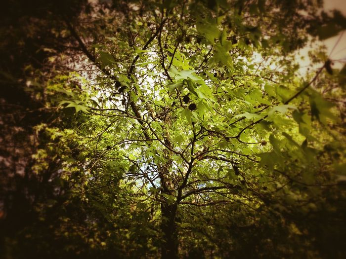 Beauty In Nature Vendée P9 Green Color Huawai P9 France🇫🇷 Outdoors Day HuaweiP9 Leica Lens No People Freshness Leaf Tree Sunlight Branch Huawei