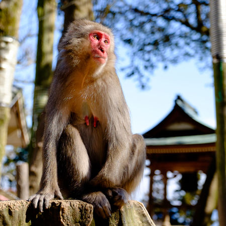 Alertness Animal Family Animal Themes Animals In The Wild Creativity Curiosity Day Depth Of Field Focus On Foreground Looking Away Mammal Monkey Oita Oita,japan One Animal Primate Relaxing Selective Focus Sitting Takasakiyama Togetherness Wildlife Young Animal Zoology The Portraitist - 2016 EyeEm Awards