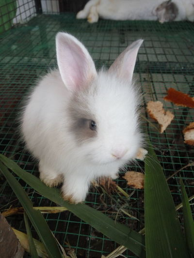 One Animal Animal Themes Domestic Animals Pets Cage Day Close-up Nature No People Rabbits 🐇