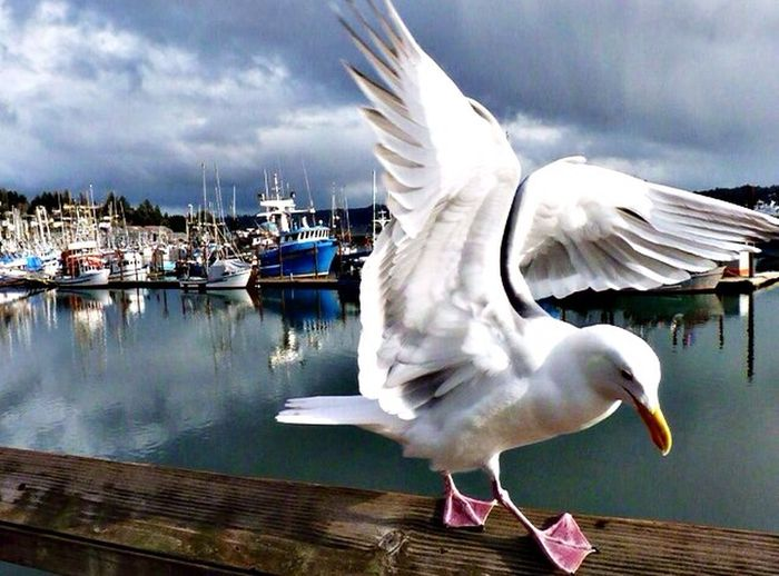 Seagull Pugetsound Water Boats