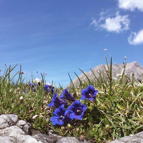 Purple flowers growing in field