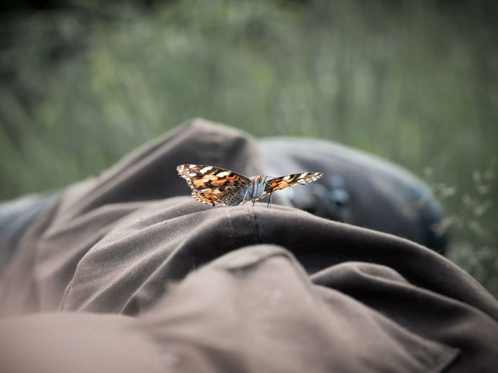 Distelfalter Sitting Animal Animal Themes Animal Wildlife Animals In The Wild Body Part Break Butterfly Hiking❤ Insect Lie Meadow Nature One Animal One Person Outdoors Relaxing Moments Relaxing Time Selective Focus Trousers Trustful Wings