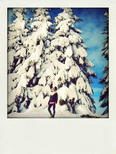 Winter Winterwonderland Snow Sunnyday