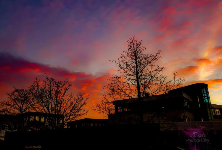 City Tree Sunset Multi Colored Silhouette Awe Dramatic Sky Sky Architecture Building Exterior