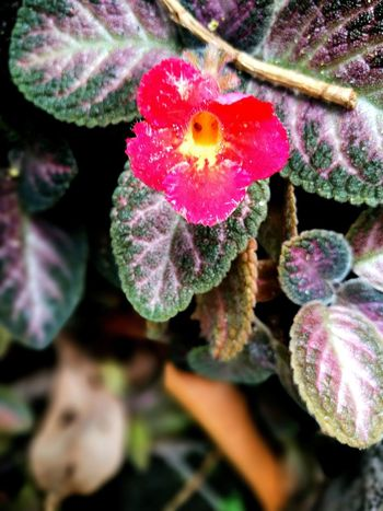 Plant Selective Focus Growth Fragility Close-up Beauty In Nature Nature Flower Freshness Botany Red In Bloom Green Color Softness Day Pink Color Springtime Outdoors Flower Head Leaves
