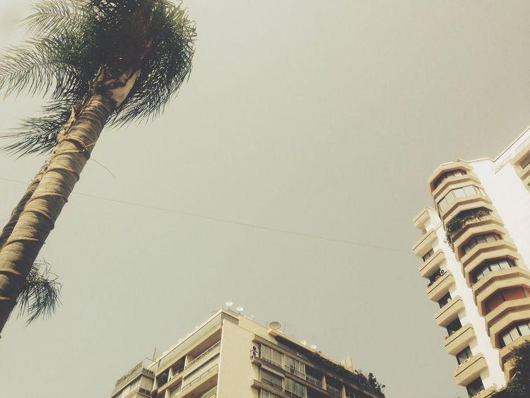 Lebanon Sky Blue Sky Palm Tree