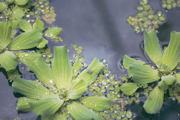 Close-up of water drops on succulent plant