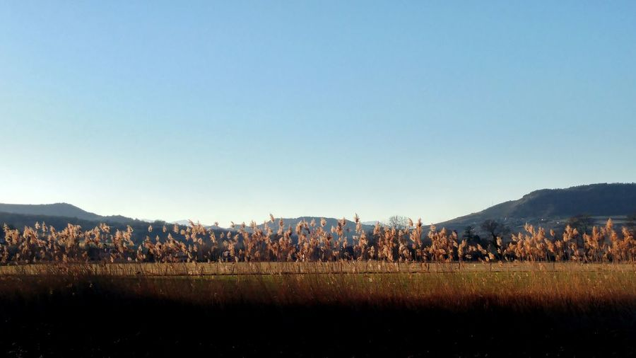 Panoramic shot of field against clear sky