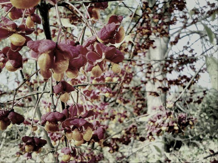 Flowers Autumn winter colors :3