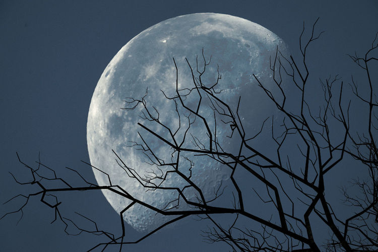 Sky Moon Space Bare Tree Beauty In Nature Nature Night Scenics - Nature No People Astronomy Low Angle View Tree Full Moon Planetary Moon Branch Tranquility Plant Moon Surface Silhouette Outdoors Space And Astronomy Moonlight
