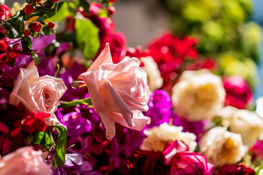 Flowers in the spring, colorful, natural, beautiful bouquet filled with many varieties of various kinds on the background of the beautiful garden full of color and scent. Flowering Plant Flower Beauty In Nature Freshness Plant Petal Vulnerability  Close-up Fragility Pink Color Inflorescence Flower Head Nature Selective Focus Focus On Foreground No People Growth Day Outdoors Rosé Bouquet Flower Arrangement