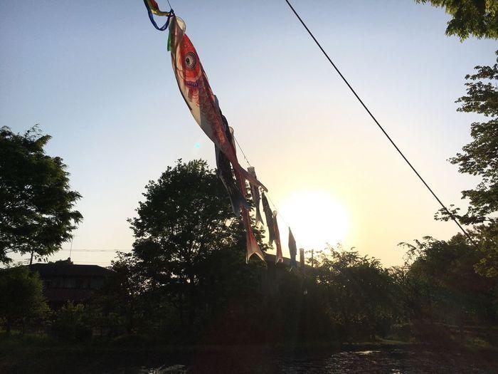 Flag Sunset Japan Fish Sky Fishflag