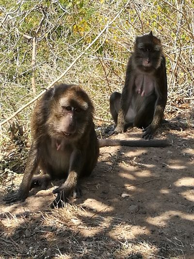 Hi monkey Animal Themes Mammal Animals In The Wild Sunlight Day Outdoors Animal Wildlife Relaxation Primate No People Sand Togetherness Nature Monkey