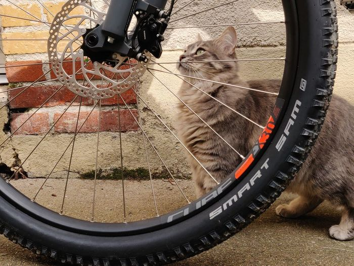 Close-up of cat with bicycle in the background