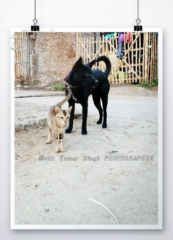 dog and cat best friend Love In Nature An Eye For Travel Press For Progress Love Without Boundaries Lovephotography  Friendship Friends ❤ Outdoors No People Day