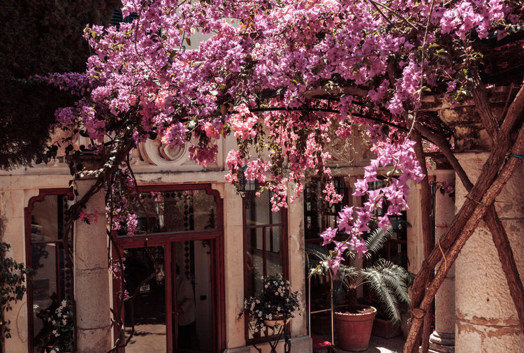 Entrance Exterior Architecture Beauty In Nature Blossom Blossoms  Branch Building Building Exterior Built Structure Day Flower Flowers Fragility Freshness Growth Nature No People Outdoors Pink Color Plant Purple Sky Summer Tree