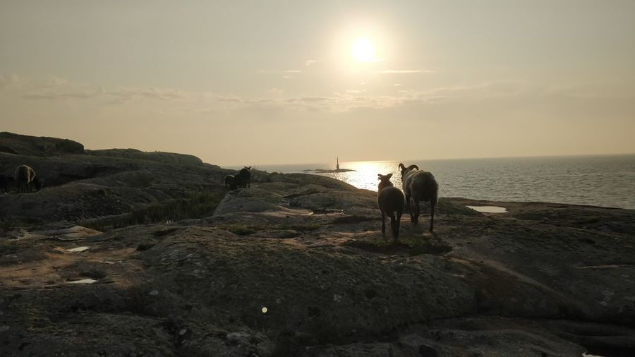 voats 2 Working Manual Worker Occupation Sea Men Sunset Togetherness Beach Farmer Water