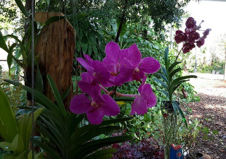 Firehouse gallery garden,orchid flowers.