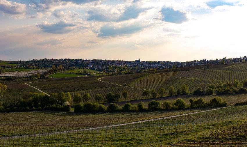 Scenic view of vineyard against sky