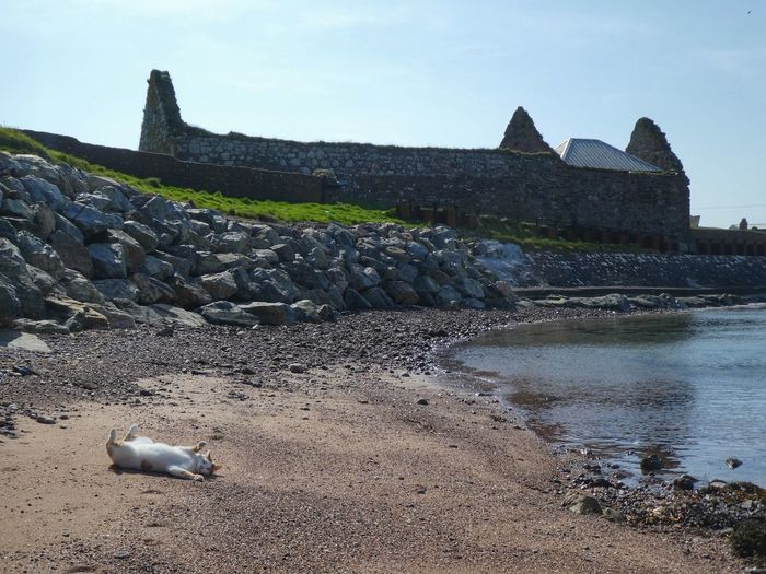 Cat on a Beach Wildlife Outer Hebrides Cat FUNNY ANIMALS Funny Cat Isle Of Lewis Architecture Sky Built Structure Water History The Past Nature Day Building Exterior No People Travel Destinations Sunlight Outdoors Travel Old Tourism Building Land Ruined My Best Photo