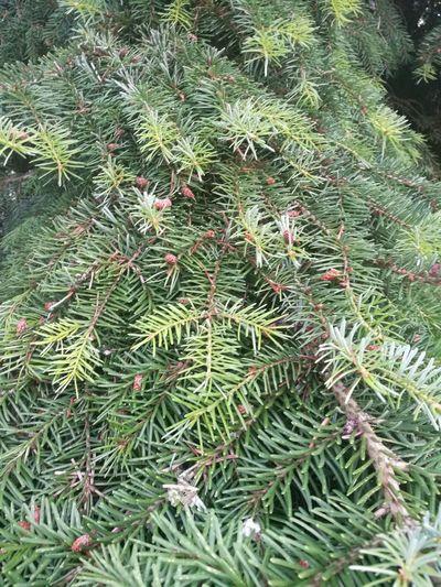 Backgrounds Full Frame Leaf Close-up Grass Plant Green Color