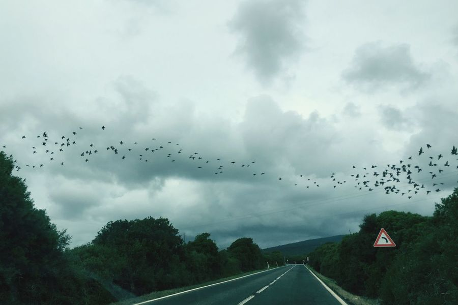 Birds Murmurations Skydancers Flock Of Birds Nature