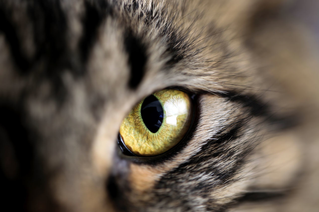 Cropped portrait of cat