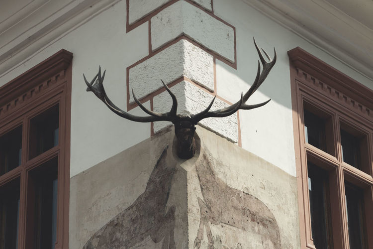 Low angle view of animal head mounted on wall