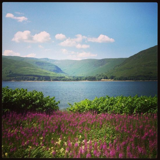 Beauty In Nature Flower Heather Lake Landscape Nature Sky Tranquility