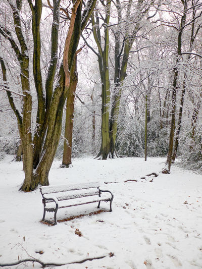Absence Bare Tree Beauty In Nature Branch Cold Temperature Day Landscape Nature No People North London Outdoors Park Park - Man Made Space Queens Wood Scenics Snow Tranquil Scene Tranquility Tree Weather Winter