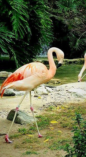Bird Photography Animal Photography Zoo Life Taking Photos Hello World Birds Flamingos Los Angeles Zoo