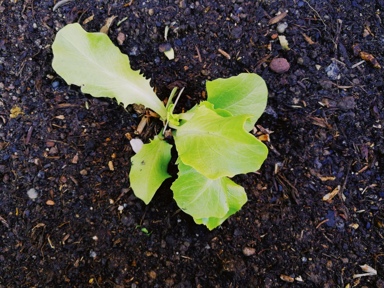 leaf, green color, close-up, high angle view, day, nature, outdoors, growth, no people, freshness, fragility, beauty in nature