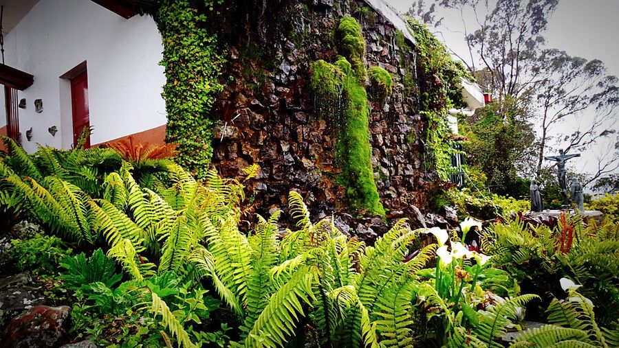 Green Color Nature Architecture Outdoors Beauty In Nature Art Is Everywhere MMartenco Tranquility Amo A Colombia