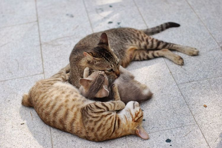 Animal Themes Day Domestic Animals Domestic Cat Feline High Angle View Lying Down Mammal Nature No People Outdoors Pets Relaxation Sleeping Tiled Floor First Eyeem Photo