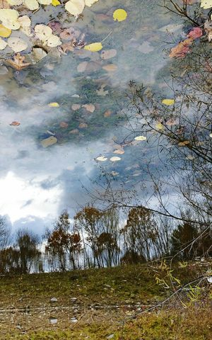 Outdoors No People Tree Nature Sky Day Beauty In Nature Autumn Tranquility Reflection In The Water Trees And Sky Leaf Leaves In Water Forest 3XSPhotographyUnity Perspectives On Nature