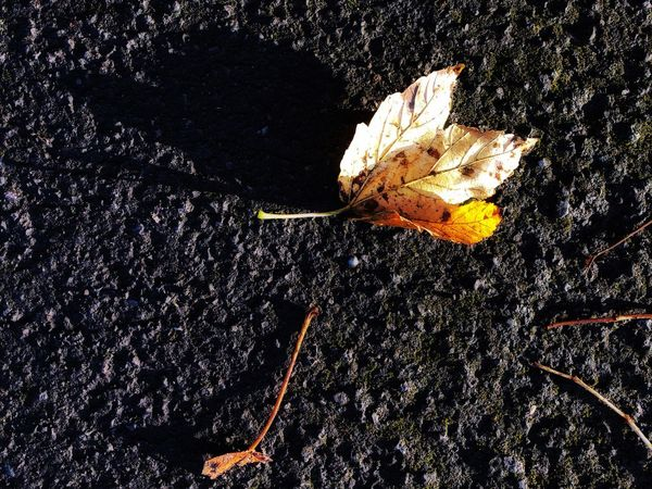 Autumn colors Fall Autumn Nature No People High Angle View Close-up Outdoors Day Road Leaf Sunlight Vulnerability  Plant Part Asphalt Falling Fragility Textured  Backgrounds Street