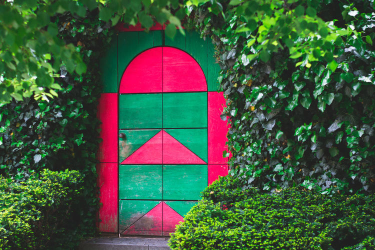 Close-up Closed Day Door Doorporn Doors Doorway Geometric Shape Green Green Color Growth Lush Foliage Multi Colored Nature No People Outdoors Plant Red Tree