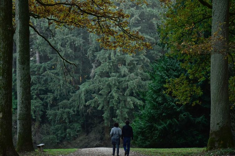 Couple Autumn colors Idyllic Lush Foliage Arboretum Sonian Forest Tree Plant Leisure Activity Real People Lifestyles Growth Forest Land Beauty In Nature Rear View Nature Men Green Color Full Length Day Standing Walking Adult Outdoors