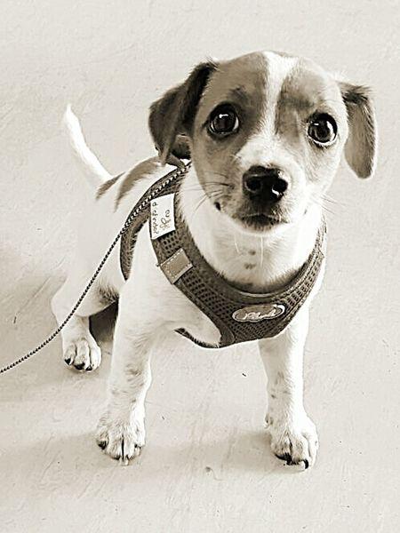 Einfach Süß Dog Pets One Animal Hund Sweet Süss Welpe