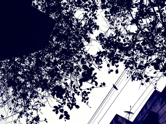 Low Angle View Outdoors Tree Day Bird Sky Wires In The Sky Bird Sitting On Wire Leaf Vein Leaf Branches Branches And Leaves The Week On EyeEm