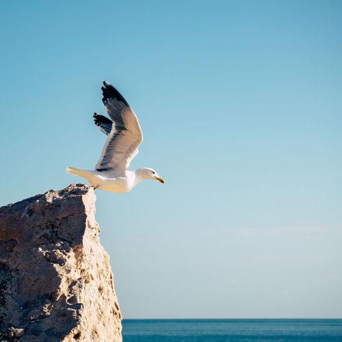 A bird taking